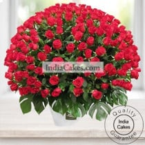Arrangement of 150 Roses