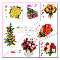 7 Days Package