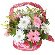 12 Pink & White Gerberas with Fillers Arrangement