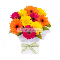 12 Mix Gerberas Arrangement