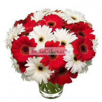 Red and White Gerberas in Vase