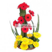 Red & Yellow Upgloss Gerberas Arrangement